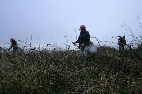 The chap on the right is raking the mowings, which were burnt. Removing the debris reduces the fertility of the soil, which reduces the vitality of the rank vegetation; 10th January 2013.