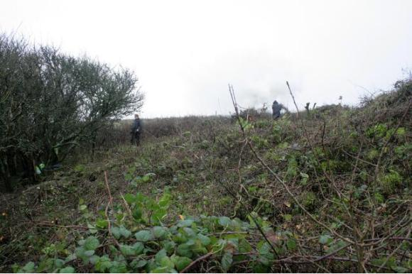 Looking S towards SE corner of the garden boundary wall just under the Prunus scrub; 10th January 2013