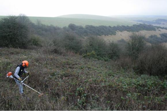 View beyond the site, towards Castle Hill to the NE, from on top of the mound of demolition rubble; 10th January 2013