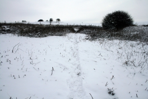 Looking N towards cottage site in brambles on right; January 21st 2013.