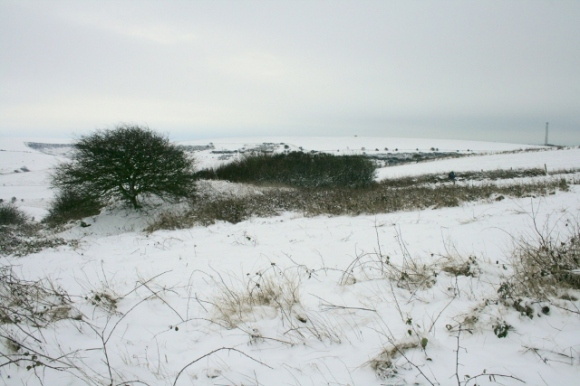 Looking SE at Newmarket Cottage site in snow; January 21st 2013.