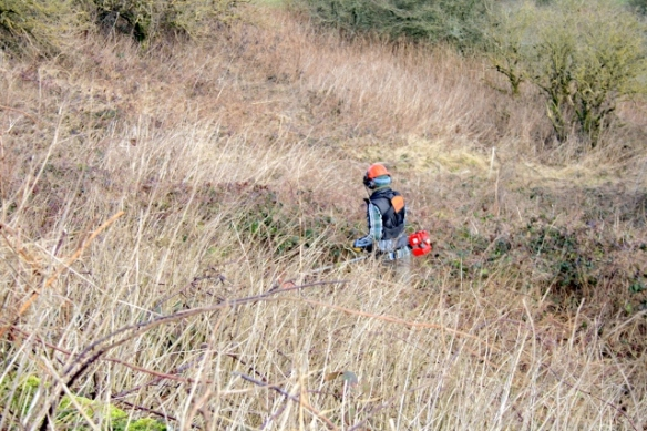 Lokking down from rubble mound at Lou Parkinson clearing just to the E/NE of the site.