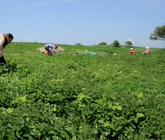Photo taken from the S end of the former garden of new growth of nettles being cut.