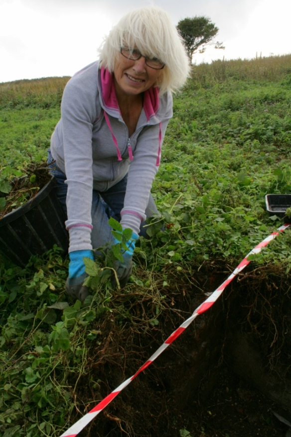 Discovery of the Newmarket Farm Cottage