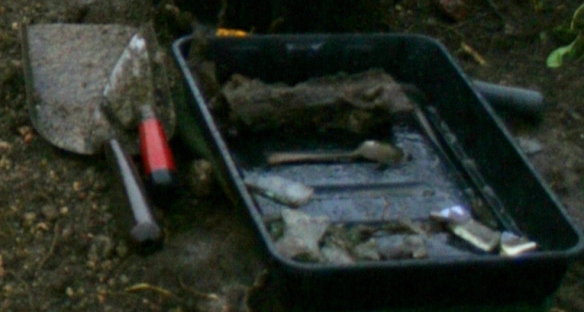 One of two finds trays from just S of S extension of cottage