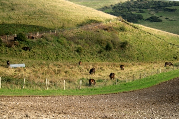 Exmoor ponies in Castle HIll NNR