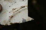 Reverse of decorated dinner plate shard from partially excavated grid square S of cottage, E of ~1880 extension; 25th October 2013.