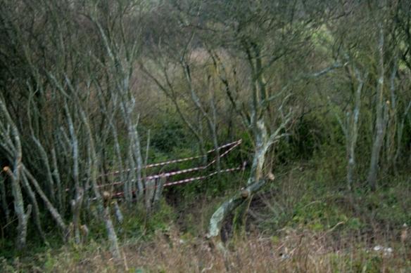 Hazard tape blocking access to dig site via path through prunus scrub