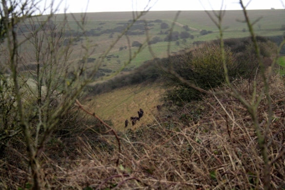 Exmoor ponies sheltering from gales to south of dig site