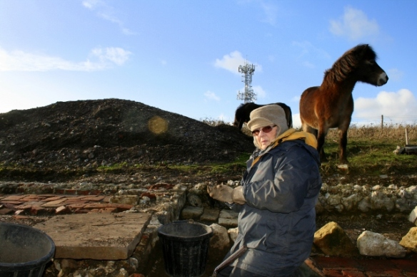 Exmoor pony looking at excavation in front of cottage