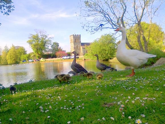 Falmer Pond and Church