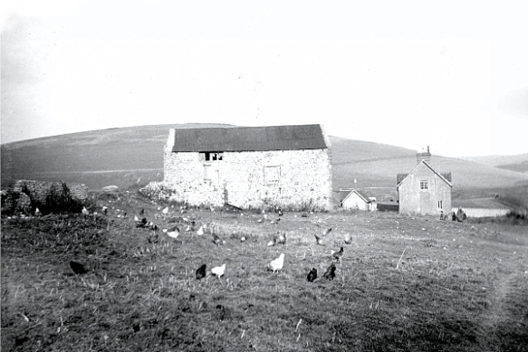 Norman chapel, used as a cow shed. (Photo: Part of the Holland, Mercer collection).