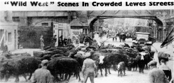 Wild West Balsdean Cattle Roundup in Lewes; Sussex Express, 18th May 1942.