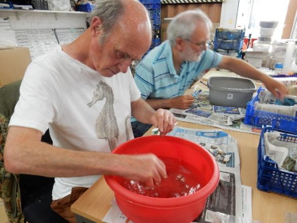 Pot Washing NMF13 finds at ASE