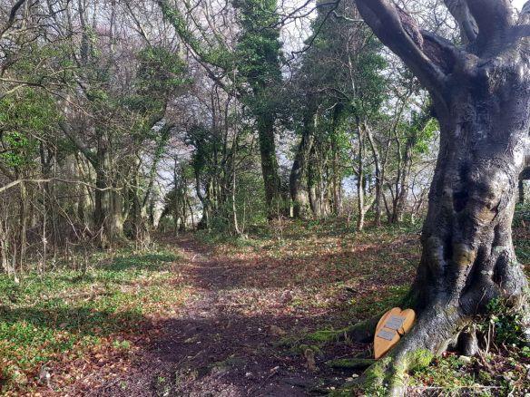 Newmarket Plantation - aka Baldy's Wood.